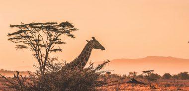 NAIROBI: na safari do Kene s letenkami z Viedne za skvelých 374€ (batožina v cene!)